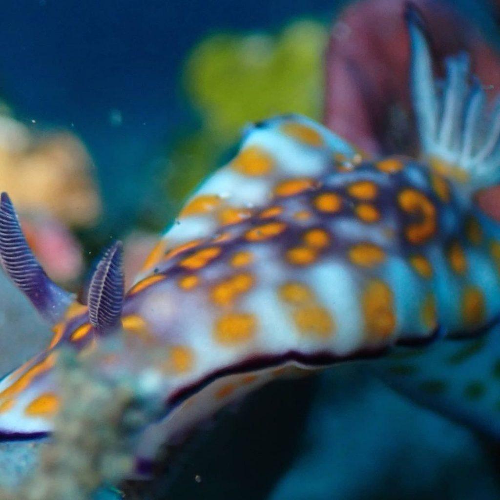 Abundant Marine Life: Signature of Amed Diving